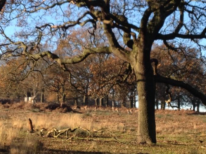 Deer, in the distance
